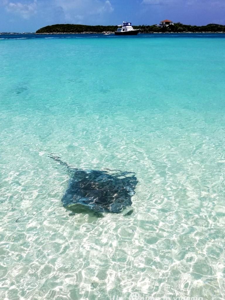 stocking island exuma bahamas